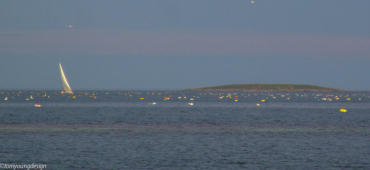 Lobster trap buoys 2020._.jpg