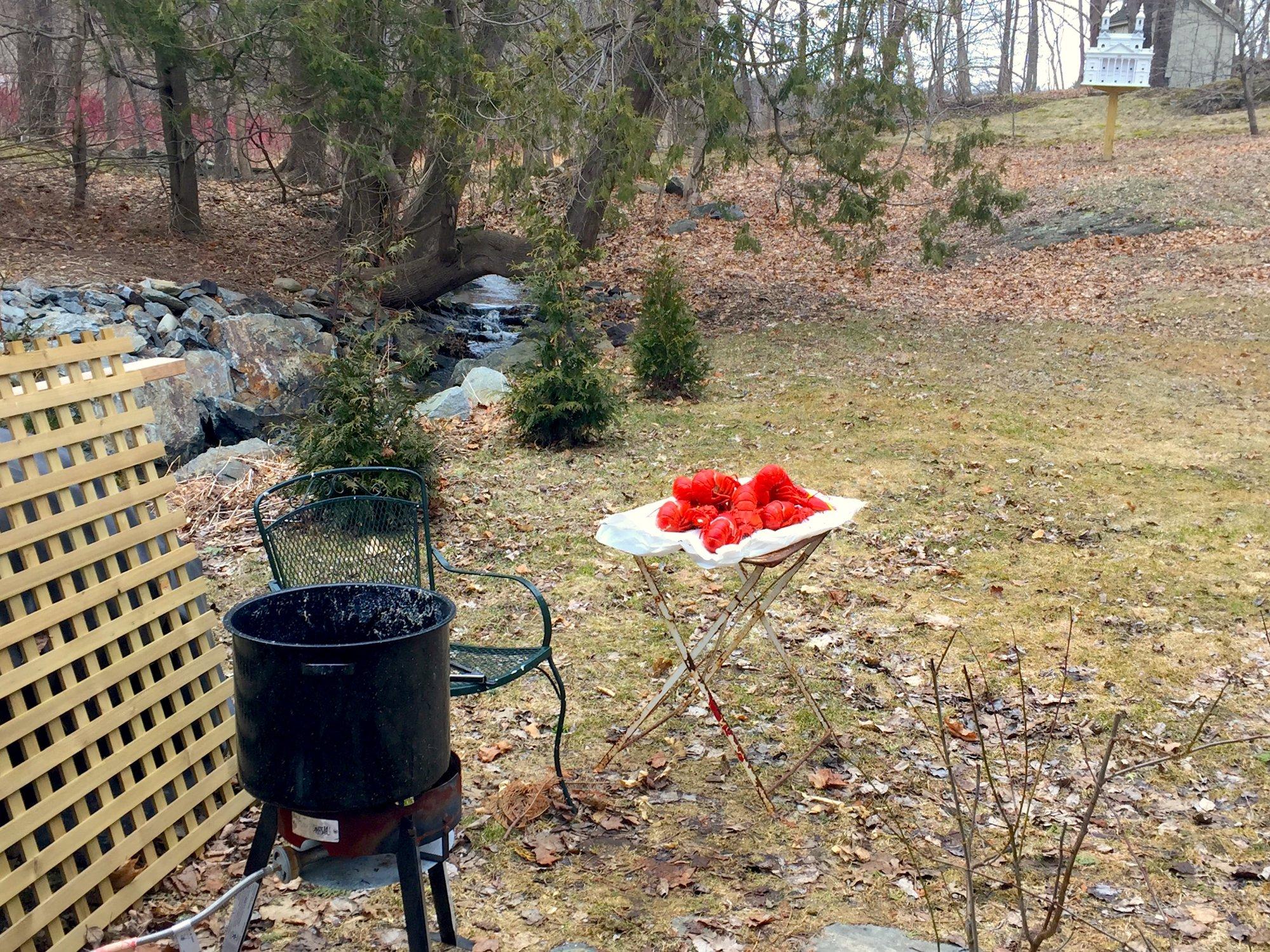 Lobsters in the backyard.JPG