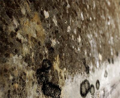 mold.jpg