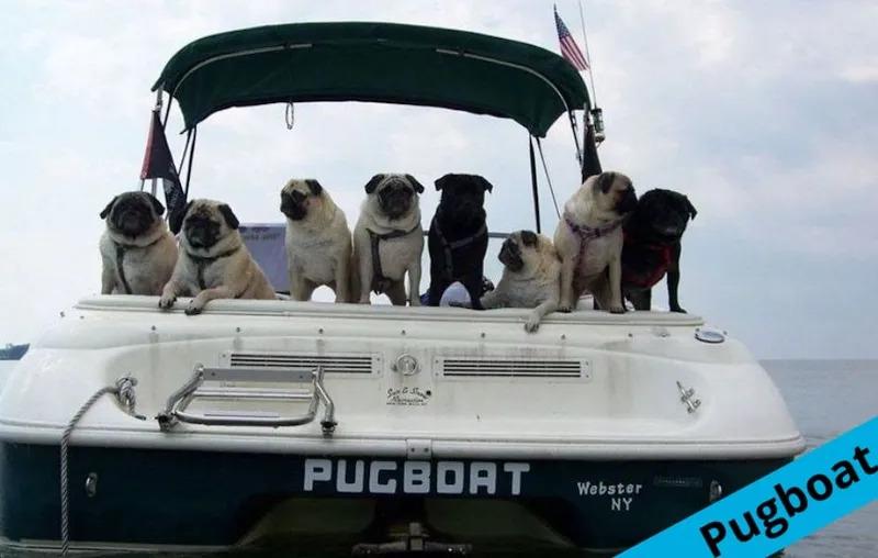 pugBoat.jpg
