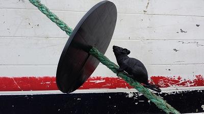 rat guard.jpg